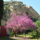 Holiday cottage at Murcia: Casa Rural El Amparo